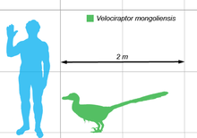 220px-Vraptor-scale.png